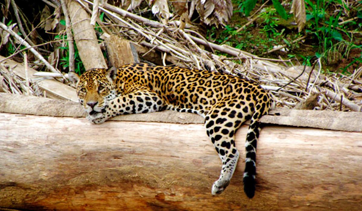 Manu-Jungle-Peru