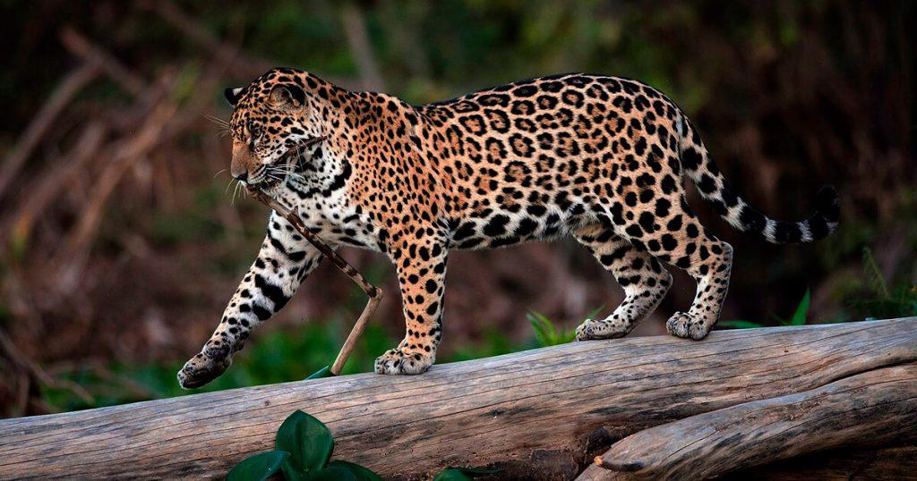amazon-jungle-tours-peru