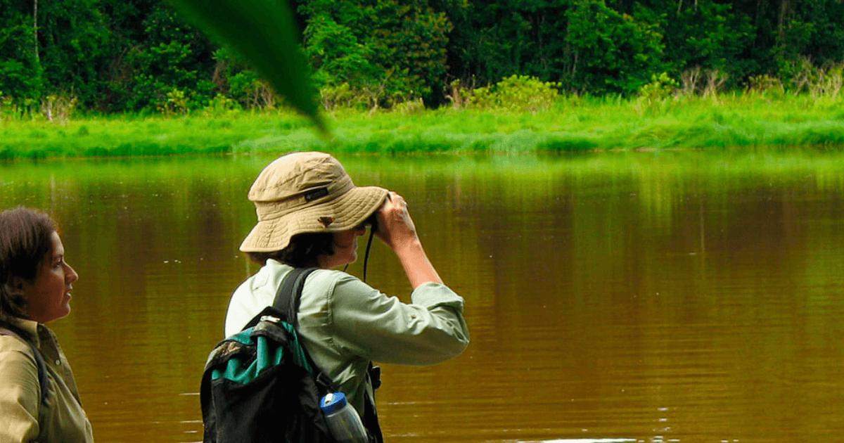 Why Visit the Bustling Amazon Rainforest During Rainy Season?