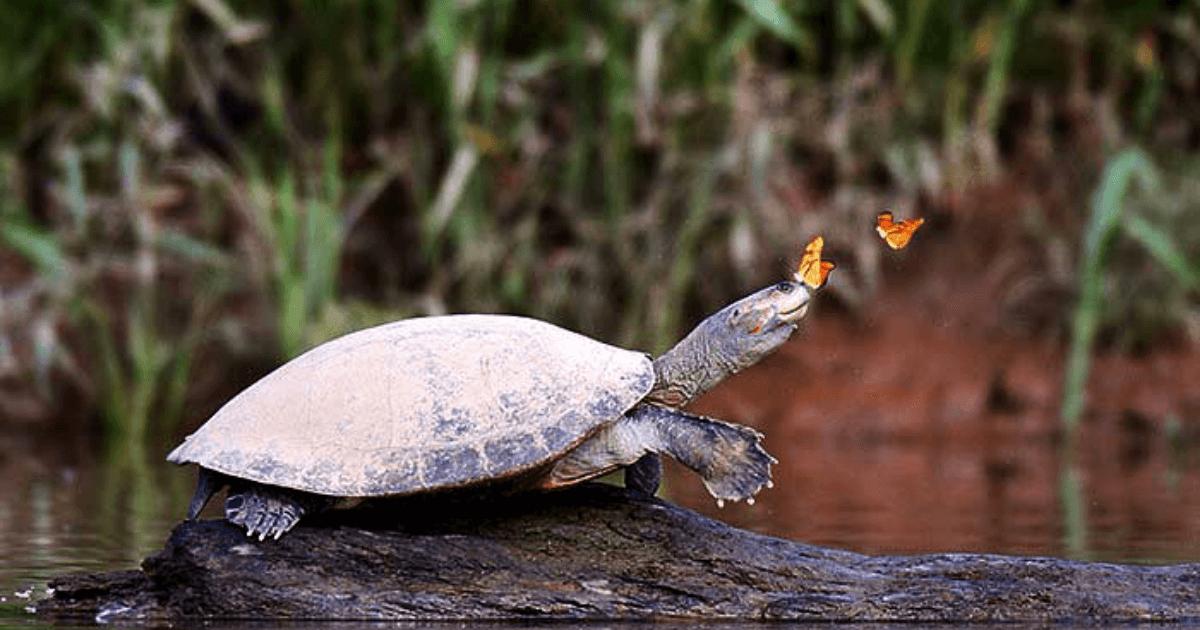 Jungle-of-Peru-Manu-National-Park
