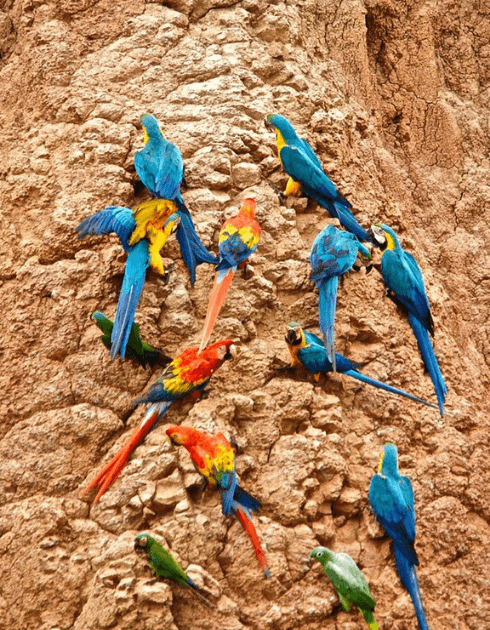 Macaw-Project-5