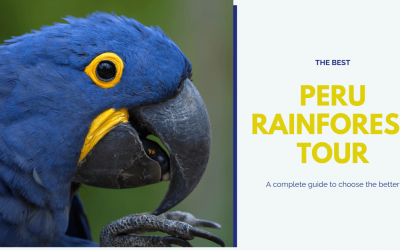 How To Choose Your Peru Rainforest Adventure?