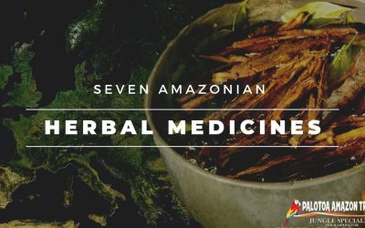 7 Peruvian Amazon Herbal Medicine That Will Amaze You